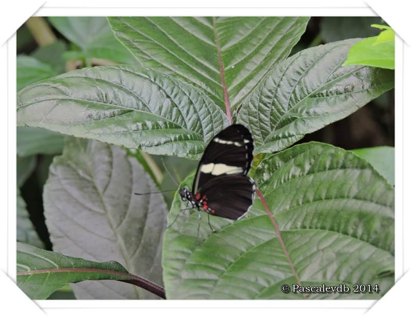 Le Paradis du Papillon à Sanguinet - 3/10