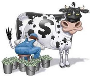 Vache à lait .