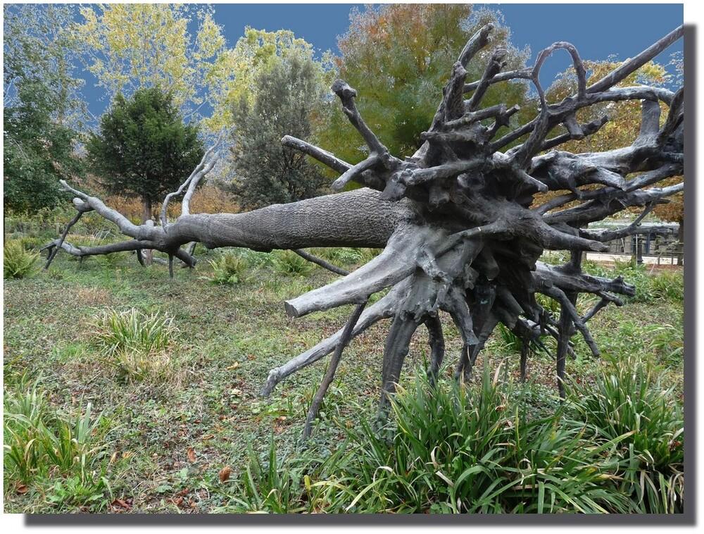 Un arbre à terre ! C'était en 1999...