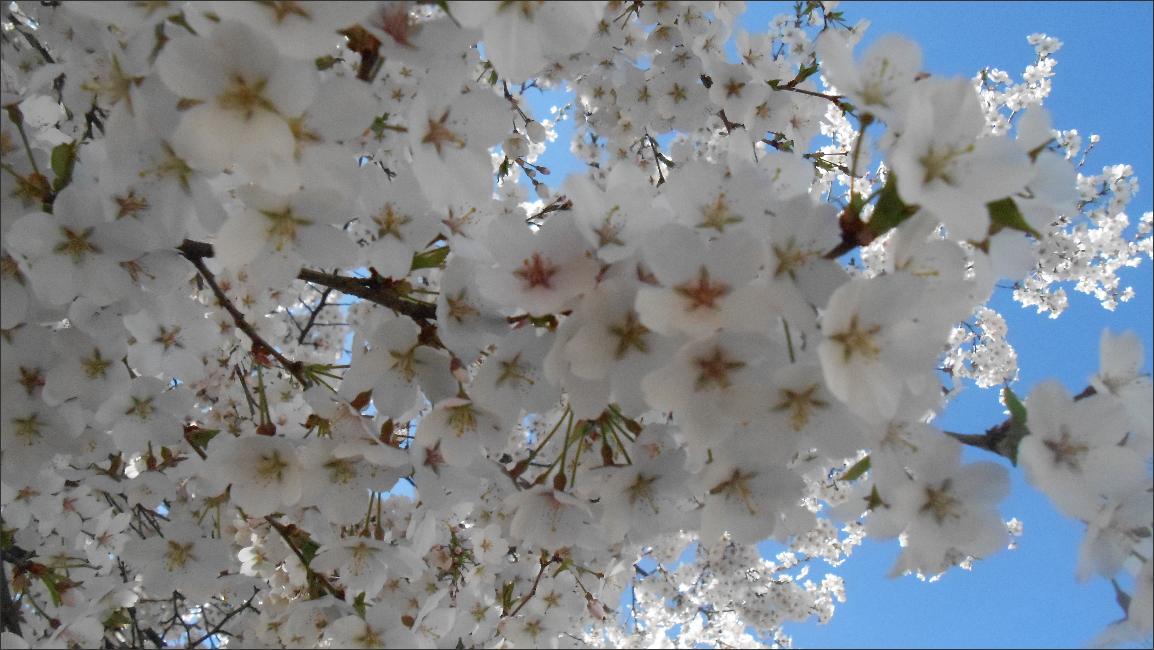 lac fleurs printemps blanches - photo #32