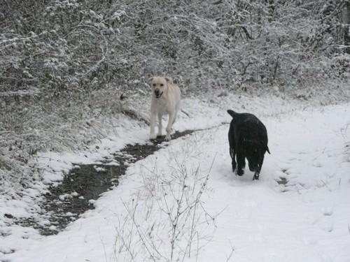 court neige 3