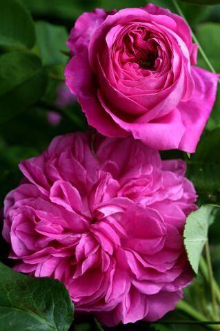 Le jardin comme exutoire (11)