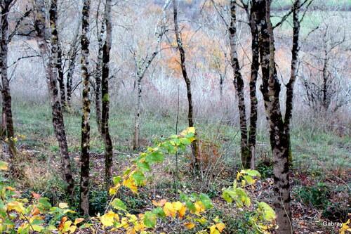 Randonnée dans un petit bois