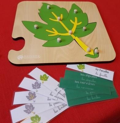 Légender des puzzles botaniques