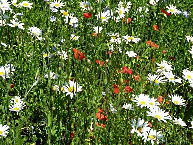 Flore lorraine 3 mp13 11 06 2010