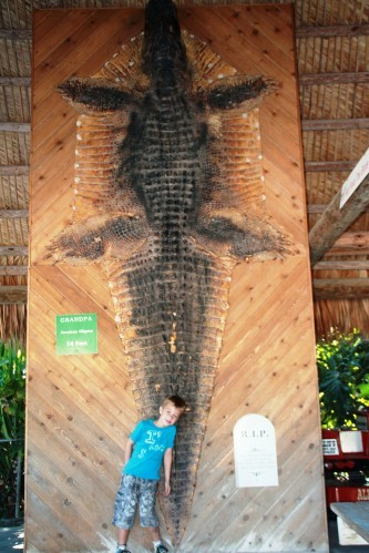 Everglades 2376