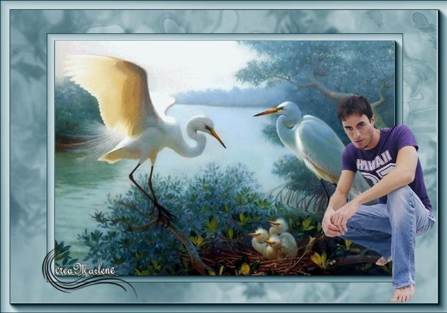 ♥ L'homme est l'oiseau ♥