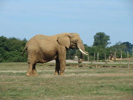 elephant__2_