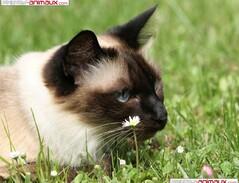 les chats du clan des fougères : images (voir articles présentations du clan des fougères...)