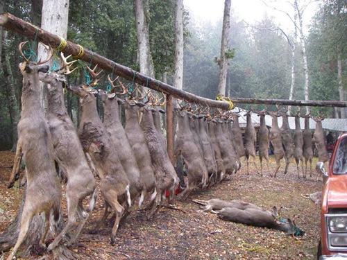 La maltraitance envers les animaux