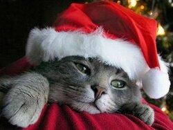 Cadeau de fin d'année de la Vie Des Chats