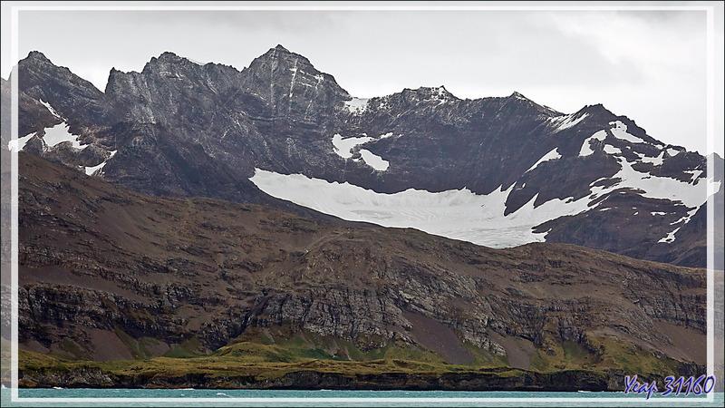 Vues sur quelques glaciers et gros névés - Géorgie du Sud