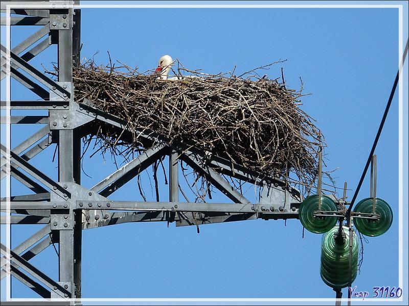 6 mai 2017 : les deux nids de cigognes de Miramont-de-Comminges - 31