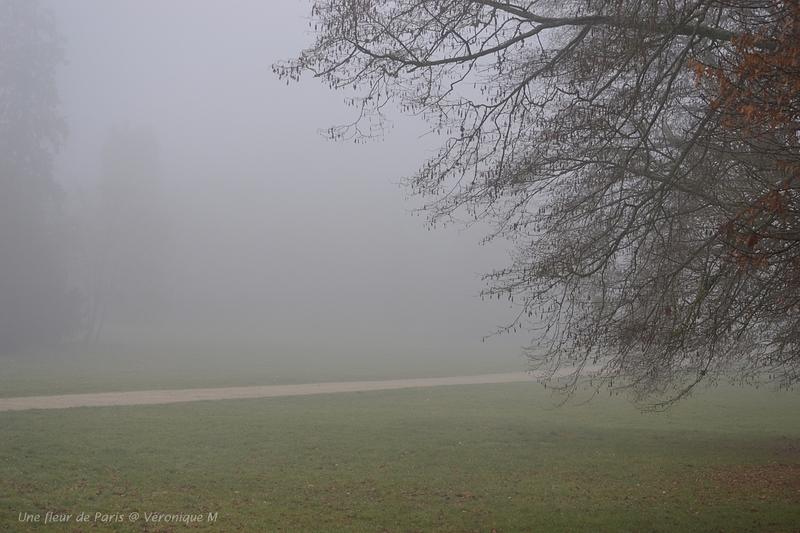 What a fog !