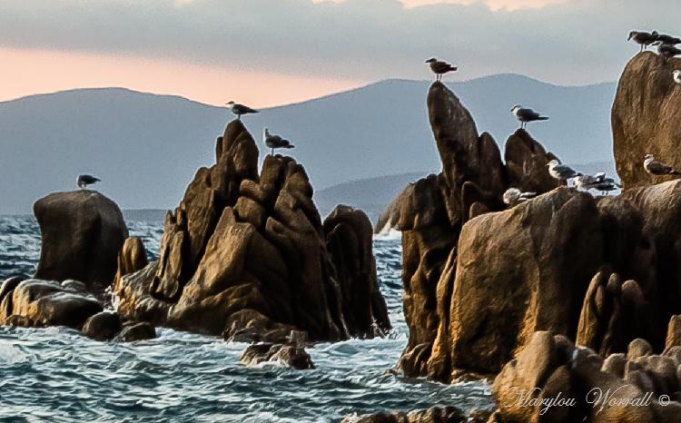 Corse : Sortie en mer 3/4