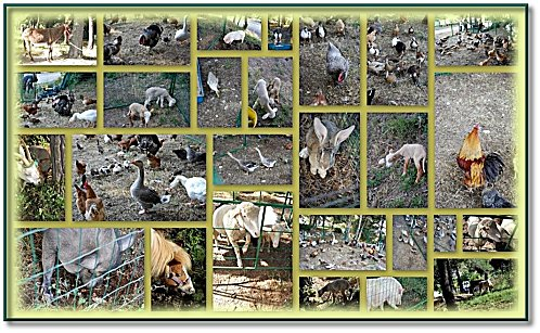 animaux-ferme-montage.jpg