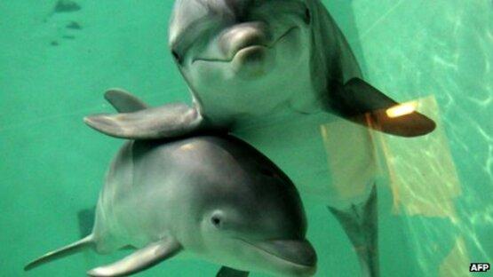 Selon des scientifiques, les dauphins méritent les mêmes droits que les humains