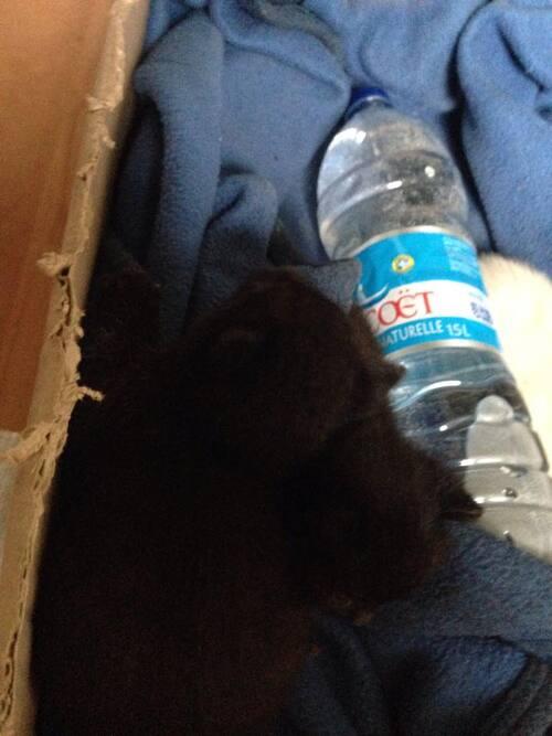 4 chatons à donner