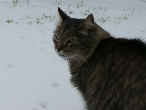 neige-chats_06.JPG