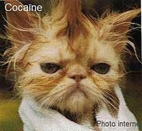 Cocaïne