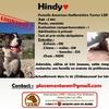 hindy fiche adoption