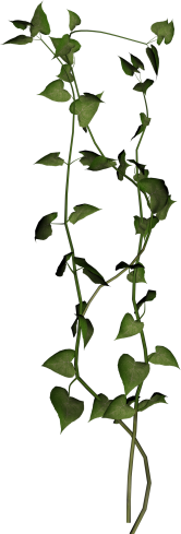 PLANT5.png