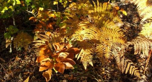 Forêt Tourangelle en automne