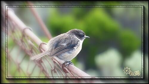 Et encore des oiseaux !!!!!!