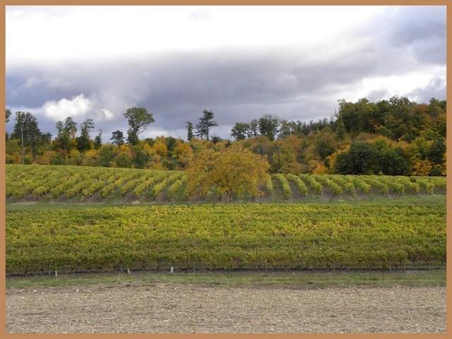 Blog de sylviebernard-art-bouteville : sylviebernard-art-bouteville, Bonneuil (Charente).