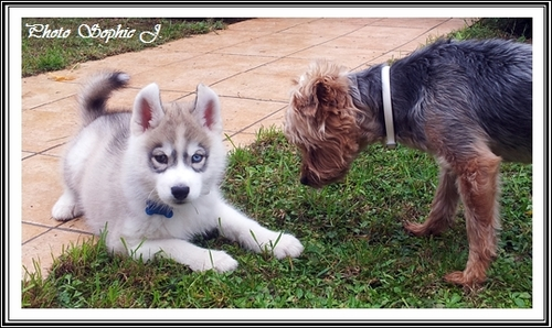 A la découverte des autres races de chiens (21 février 2015)