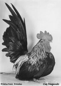 Coq Nagasaki 2