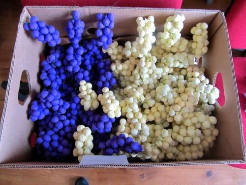 A la Mairie de Massingy on confectionne des raisins en papier crêpon pour la Saint Vincent Tournante de janvier 2013
