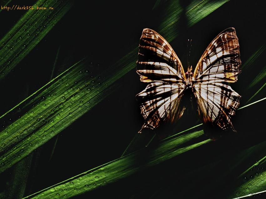 5 Images de Papillons