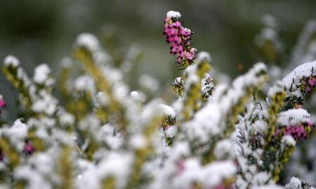 La_neige_096