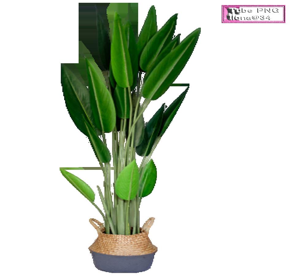 Tubes plantes exotiques en pot
