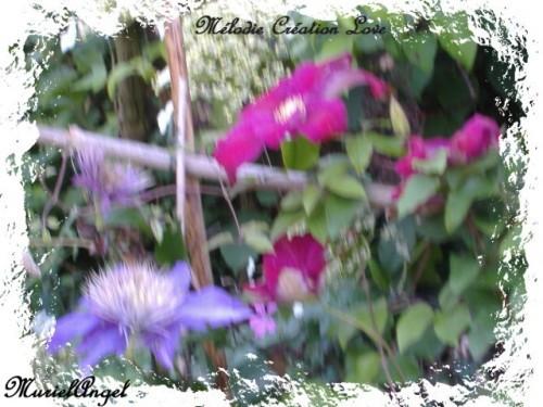 fleur-au-jardin1-copiry.JPG