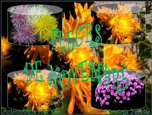 Fleurs de Novembre