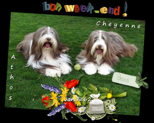 Athos & Cheyenne
