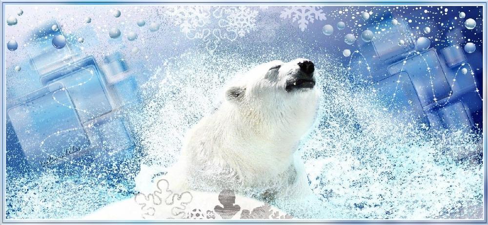 Entêtes hiver polaire