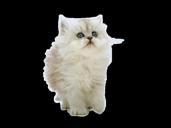 voici pour vous quelques tubes chats........