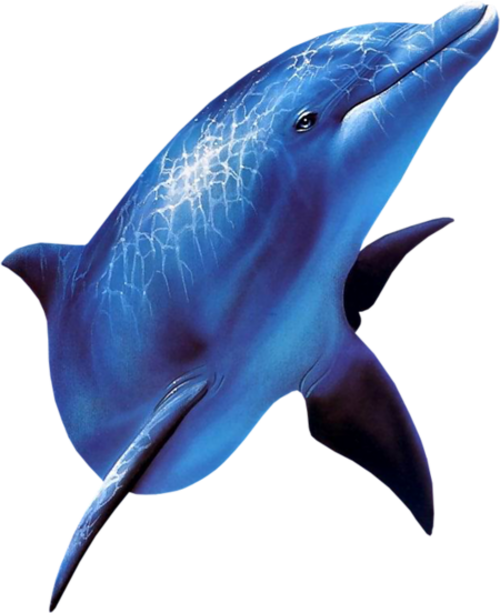 Halak,delfinek