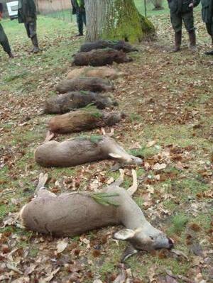 Ce que sont réellement les chasseurs