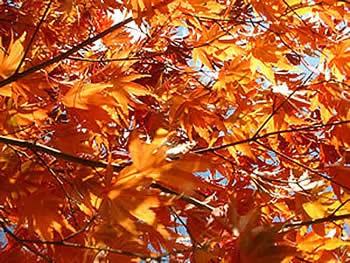 automne-charlotte.jpg