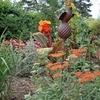 Tons-d-Orange_1067302-L