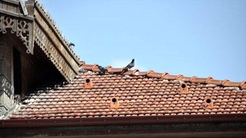 Protéger son toit et les oiseaux
