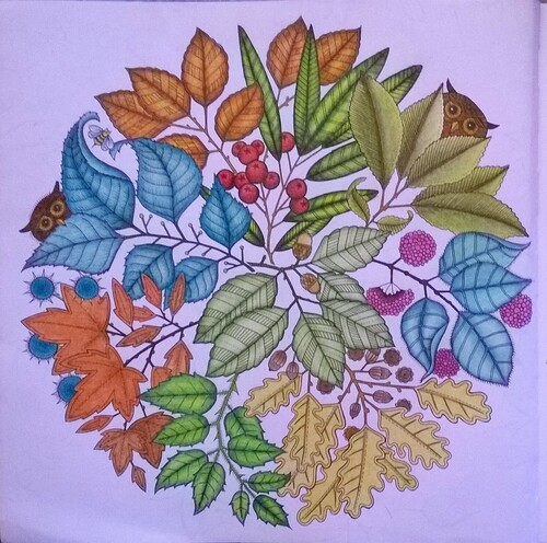 Coloriages jardin secret for O jardin secret suresnes