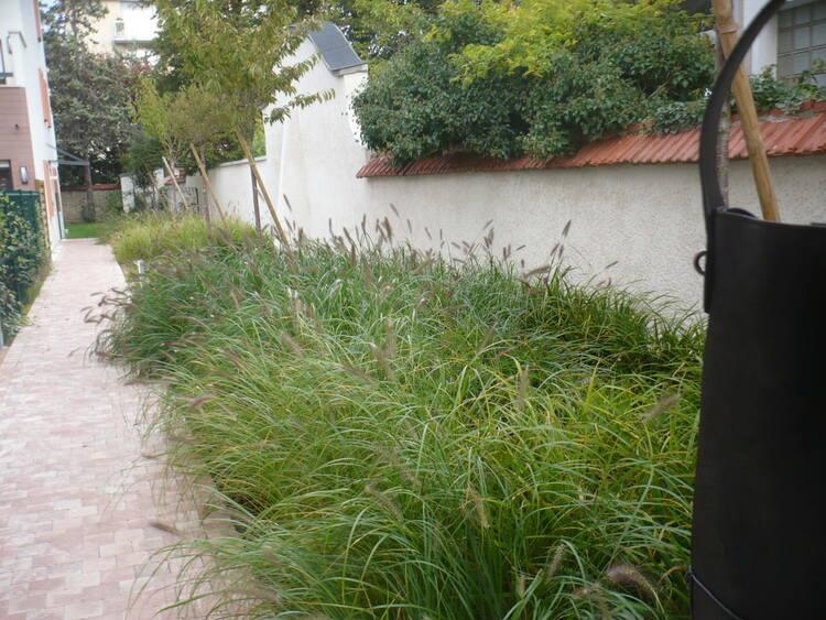 jardin sans entretien