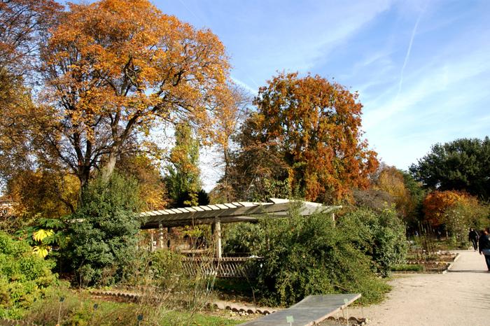 Jardin des Plantes Automne. Les arbres.