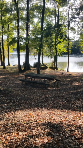 875 - Entre lacs avec Elvy !