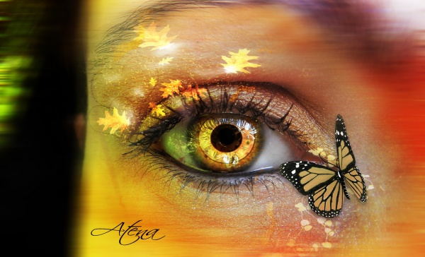 Mon oeil et mes délires
